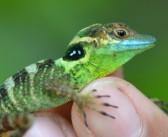 En peligro la biodiversidad más rica del Caribe