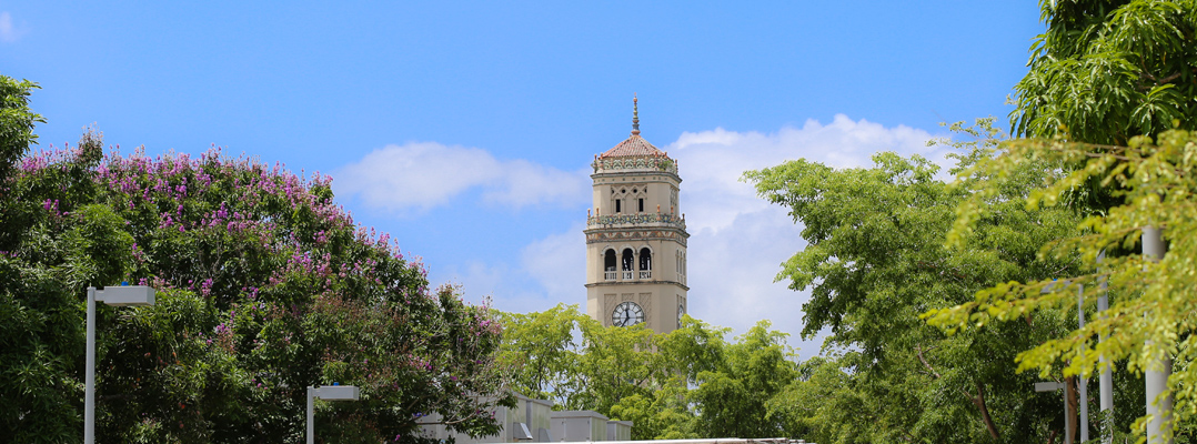 foto Torre