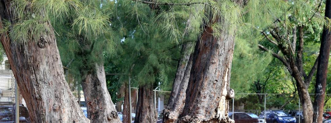 árboles UHS