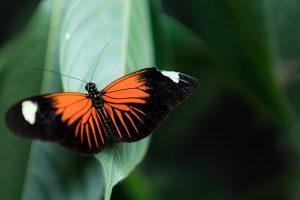 Foto 3 GamboaButterflies Luca Livraghi